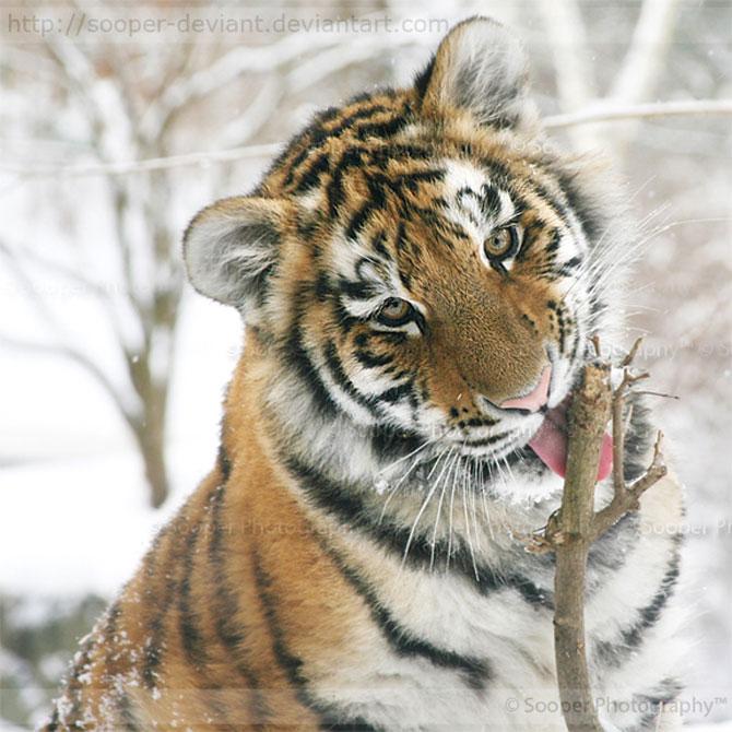 42 de super poze cu animale de Sooper Deviant - Poza 11