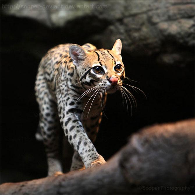 42 de super poze cu animale de Sooper Deviant - Poza 12