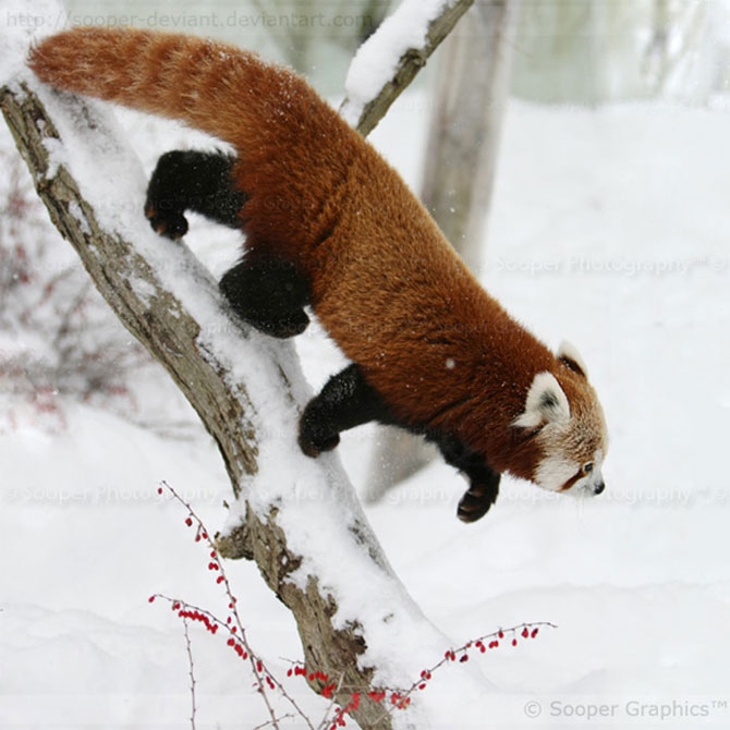 42 de super poze cu animale de Sooper Deviant - Poza 13