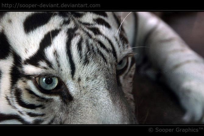 42 de super poze cu animale de Sooper Deviant - Poza 15