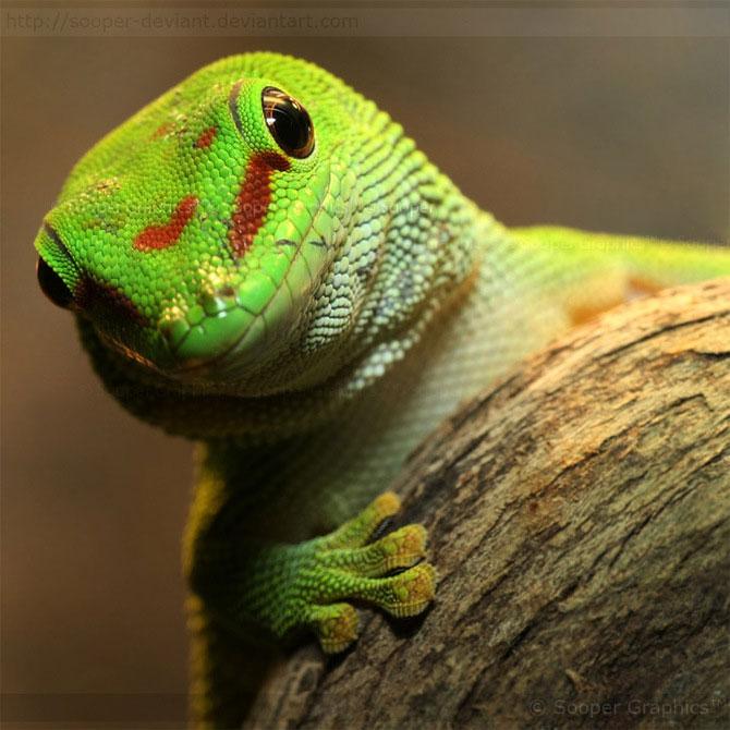 42 de super poze cu animale de Sooper Deviant - Poza 18