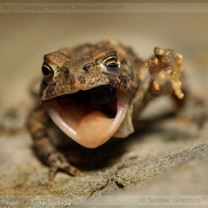 42 de super poze cu animale de Sooper Deviant - Poza 19