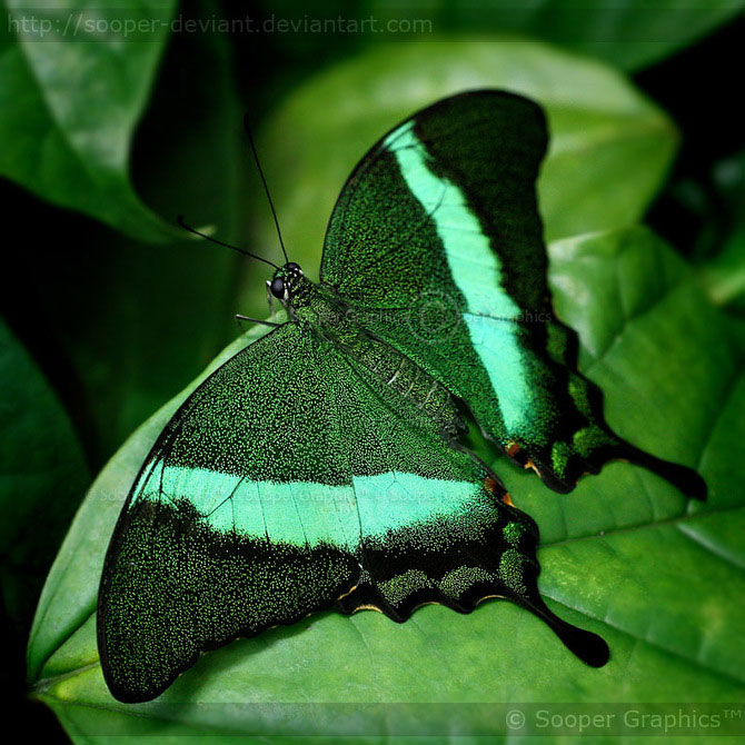 42 de super poze cu animale de Sooper Deviant - Poza 22