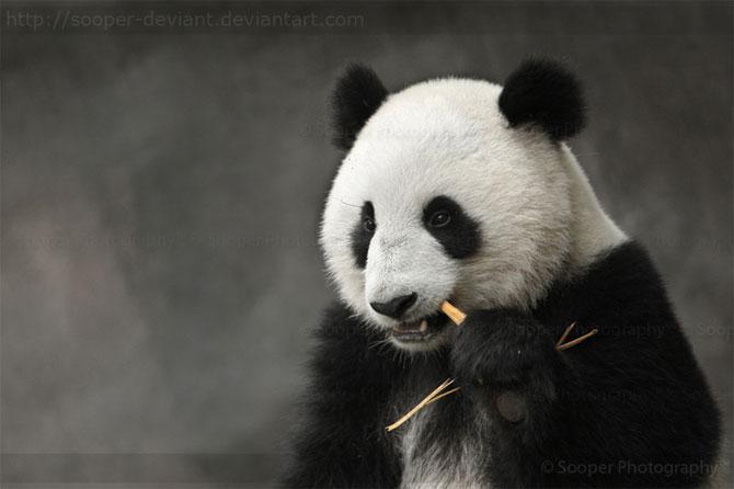 42 de super poze cu animale de Sooper Deviant - Poza 25
