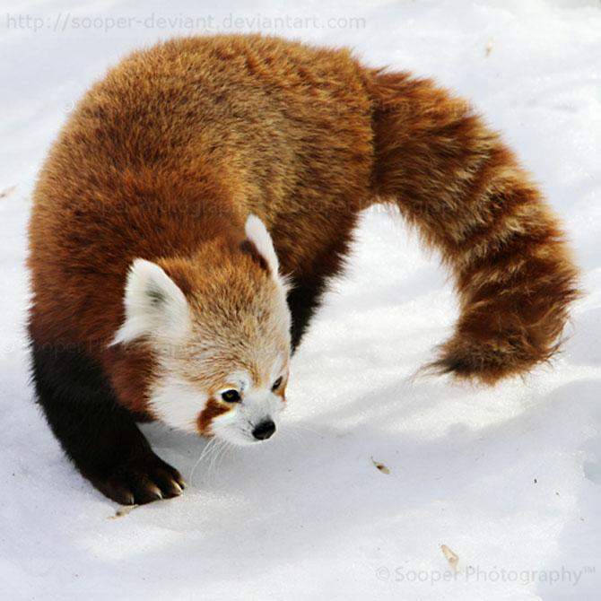 42 de super poze cu animale de Sooper Deviant - Poza 27