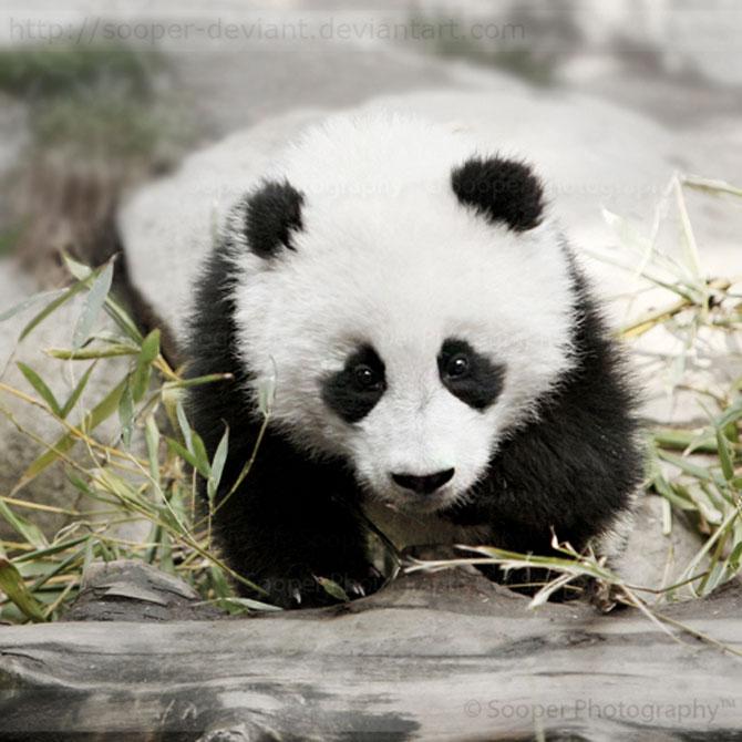 42 de super poze cu animale de Sooper Deviant - Poza 30