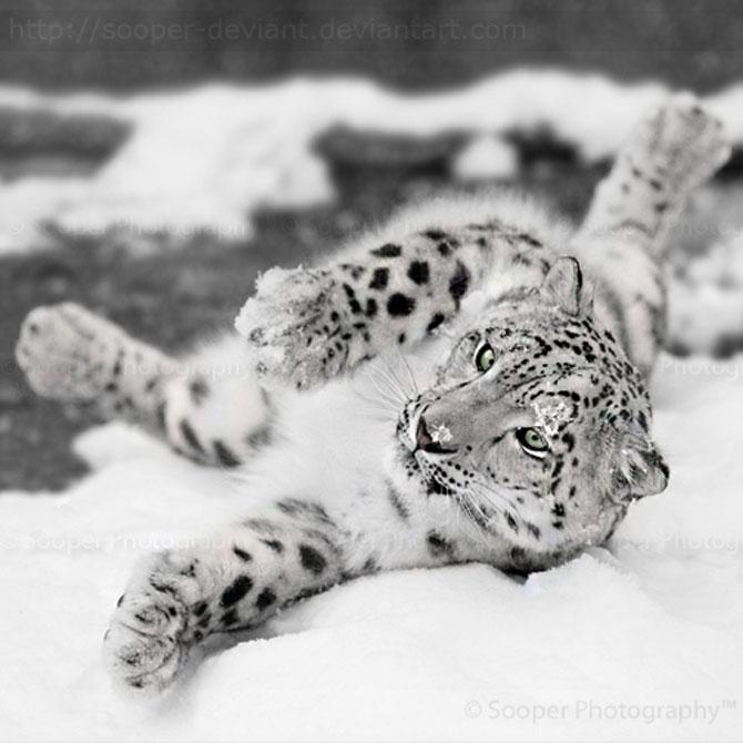 42 de super poze cu animale de Sooper Deviant - Poza 31