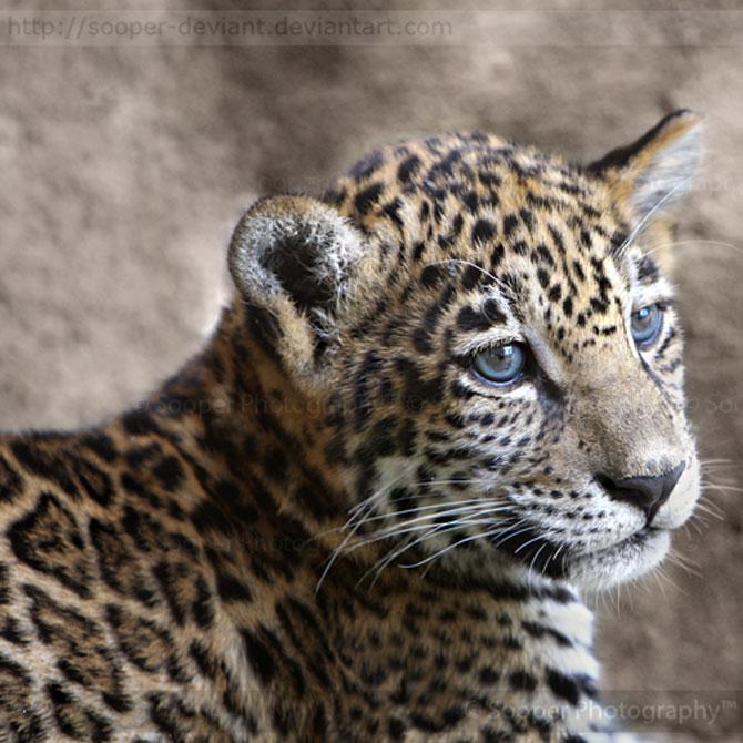 42 de super poze cu animale de Sooper Deviant - Poza 33