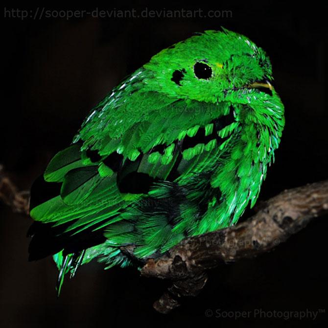 42 de super poze cu animale de Sooper Deviant - Poza 34