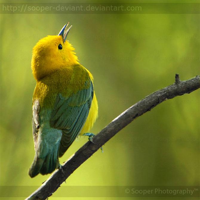 42 de super poze cu animale de Sooper Deviant - Poza 35