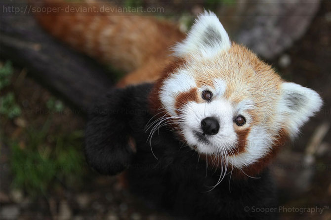 42 de super poze cu animale de Sooper Deviant - Poza 41