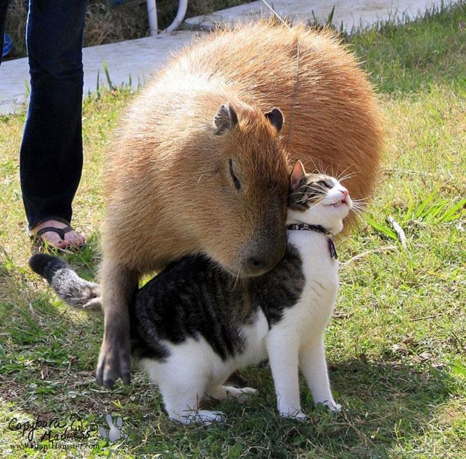 4 cupluri de animale - cei mai buni prieteni!