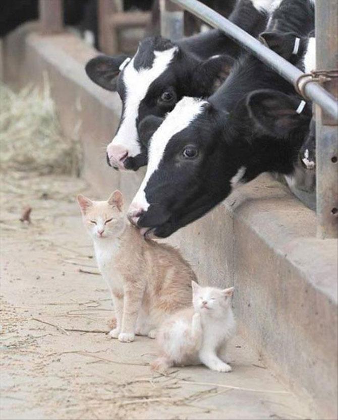 4 cupluri de animale - cei mai buni prieteni! - Poza 4