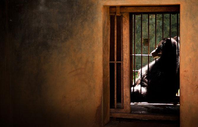 Cum traiesc animalele in captivitate? - Poza 5