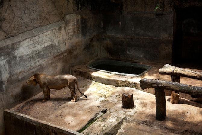 Cum traiesc animalele in captivitate? - Poza 6