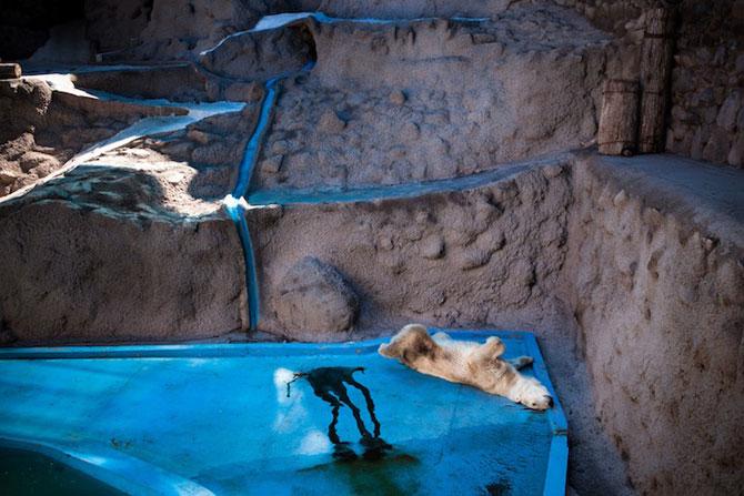 Cum traiesc animalele in captivitate? - Poza 9