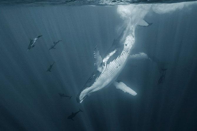 Viata secreta a balenelor, cu Darren Jew - Poza 1