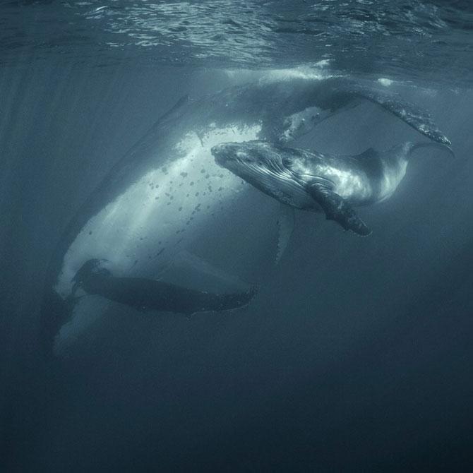 Viata secreta a balenelor, cu Darren Jew - Poza 2