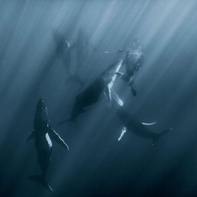 Viata secreta a balenelor, cu Darren Jew - Poza 3