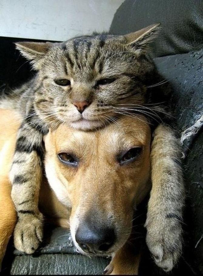 Caini si pisici care se iubesc in 14 fotografii - Poza 3