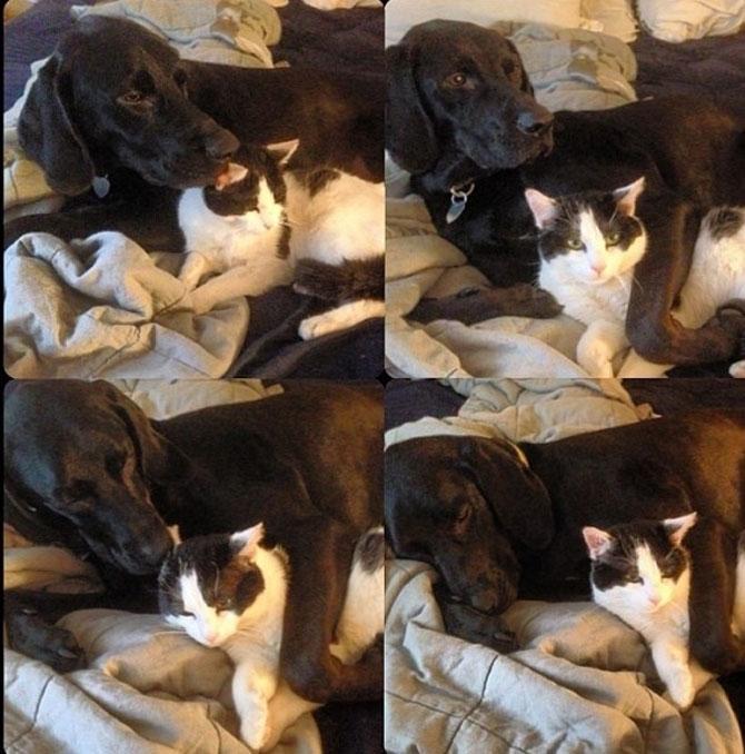 Caini si pisici care se iubesc in 14 fotografii - Poza 5