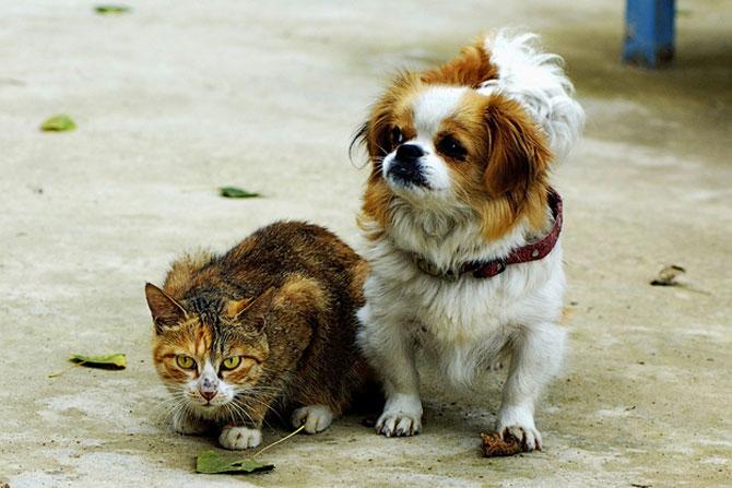 Caini si pisici care se iubesc in 14 fotografii - Poza 6