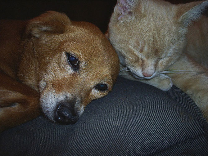 Caini si pisici care se iubesc in 14 fotografii - Poza 7