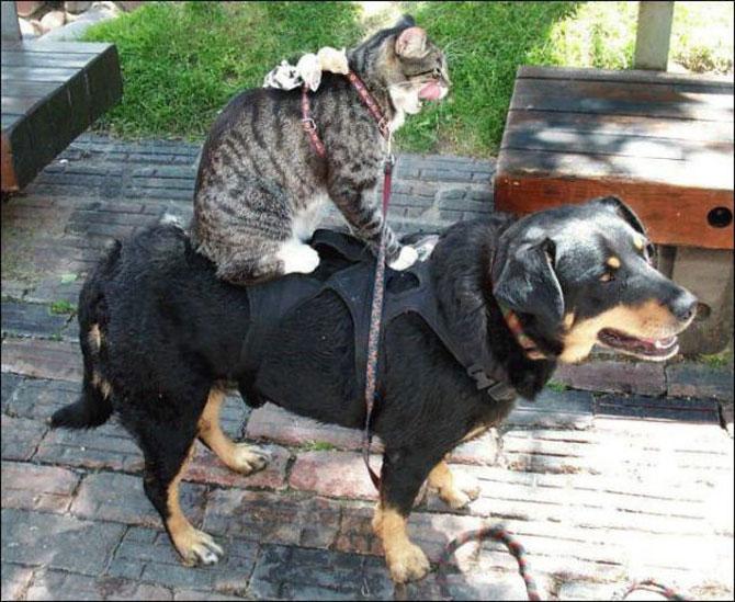 Caini si pisici care se iubesc in 14 fotografii - Poza 8