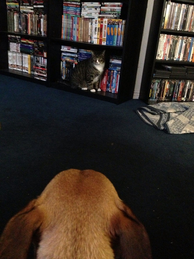 Caini si pisici care se iubesc in 14 fotografii - Poza 9