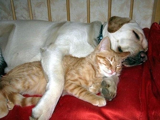 Caini si pisici care se iubesc in 14 fotografii - Poza 12