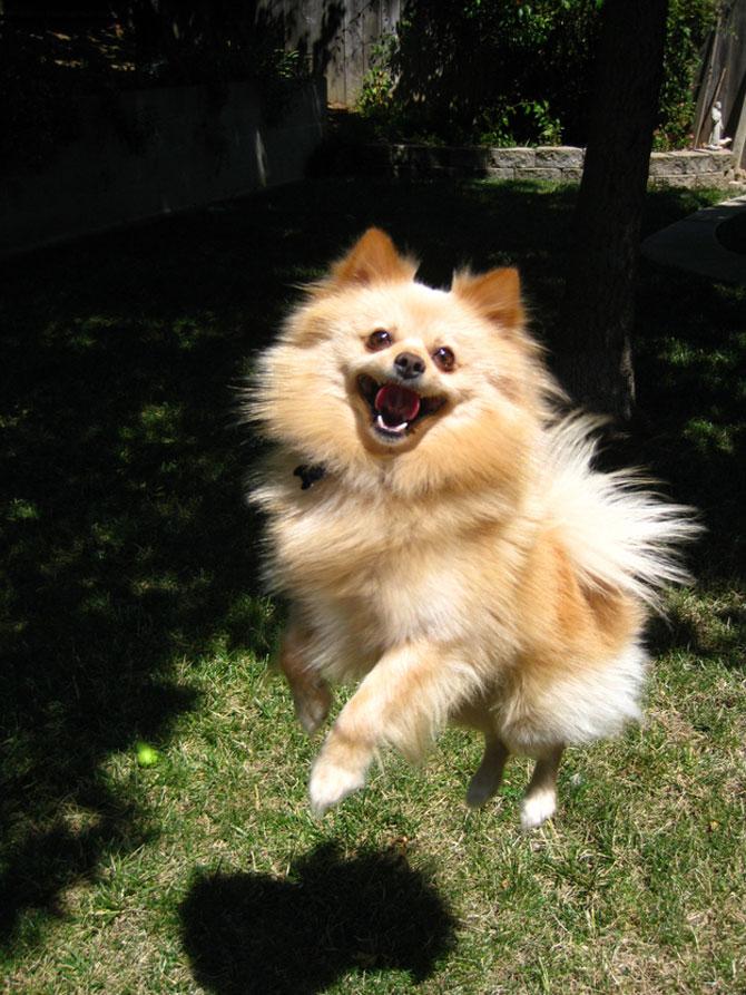 8 caini incredibil de fericiti - Poza 1