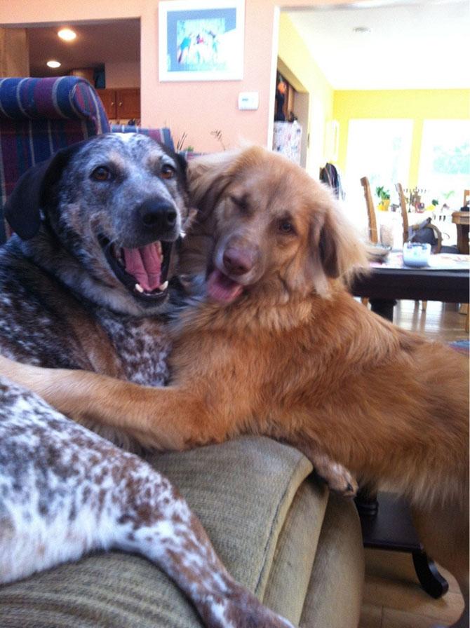 8 caini incredibil de fericiti - Poza 6