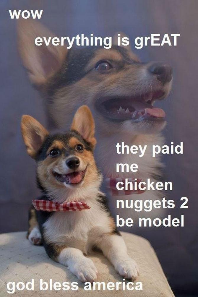 8 caini incredibil de fericiti - Poza 8