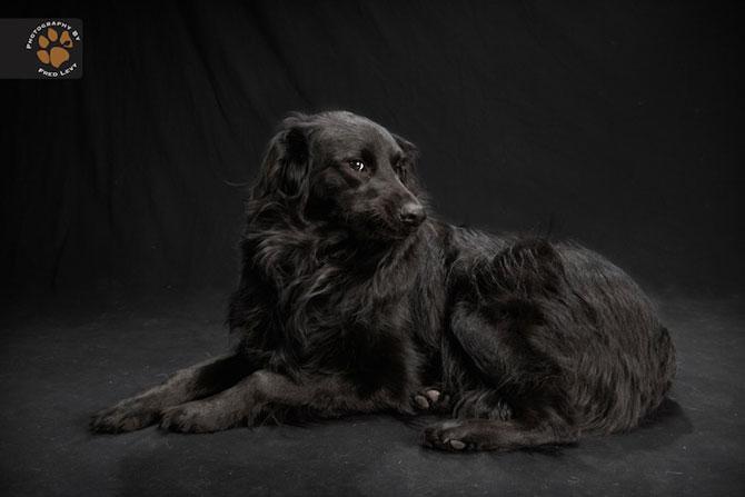 Cei mai frumosi caini negri, de Freed Levy - Poza 2