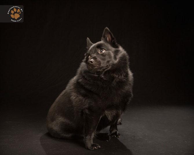 Cei mai frumosi caini negri, de Freed Levy - Poza 5