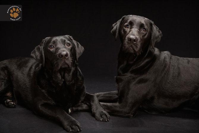 Cei mai frumosi caini negri, de Freed Levy - Poza 7