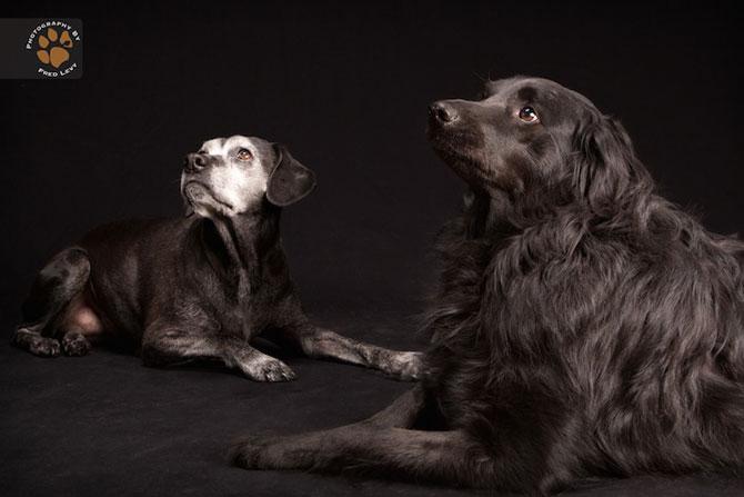 Cei mai frumosi caini negri, de Freed Levy - Poza 11