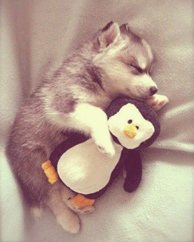 16 pui de catel dorm cu jucariile lor preferate - Poza 2