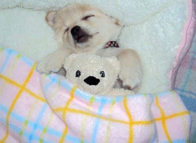 16 pui de catel dorm cu jucariile lor preferate - Poza 3