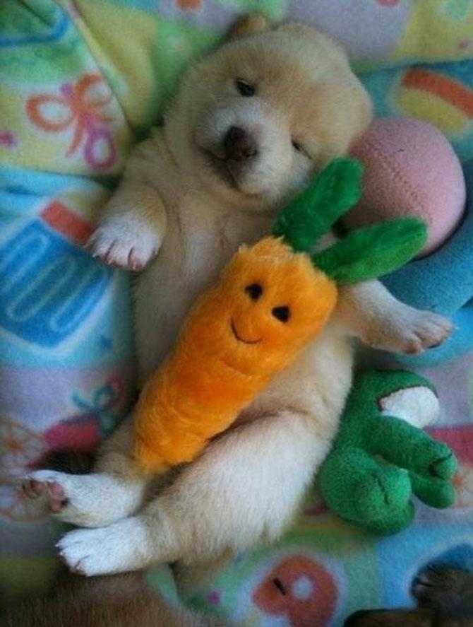 16 pui de catel dorm cu jucariile lor preferate - Poza 4