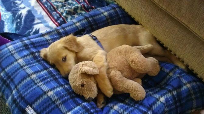 16 pui de catel dorm cu jucariile lor preferate - Poza 7