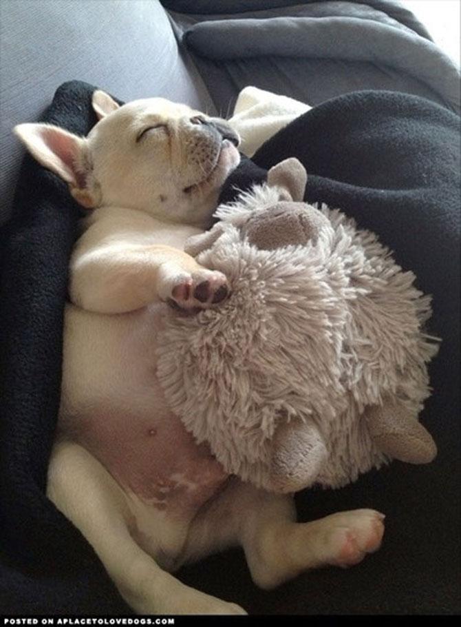 16 pui de catel dorm cu jucariile lor preferate - Poza 9