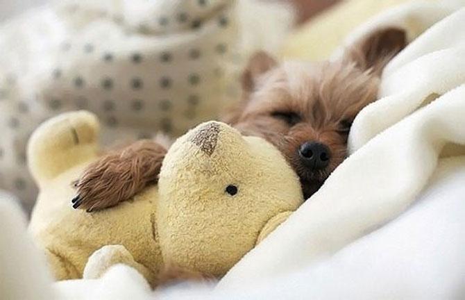16 pui de catel dorm cu jucariile lor preferate - Poza 10