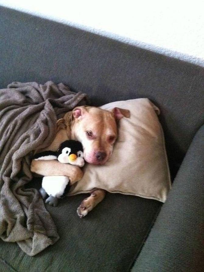 16 pui de catel dorm cu jucariile lor preferate - Poza 13