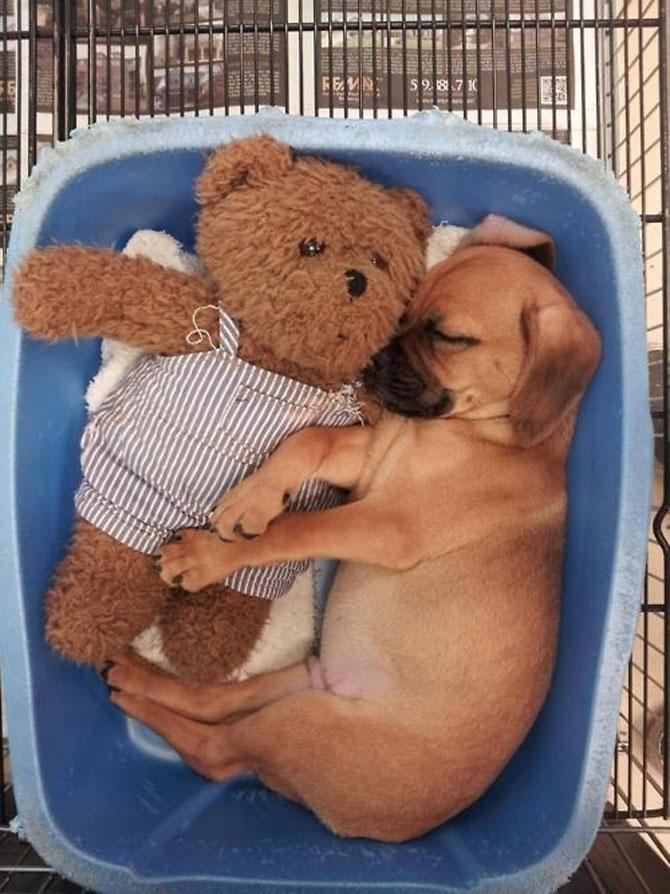 16 pui de catel dorm cu jucariile lor preferate - Poza 14