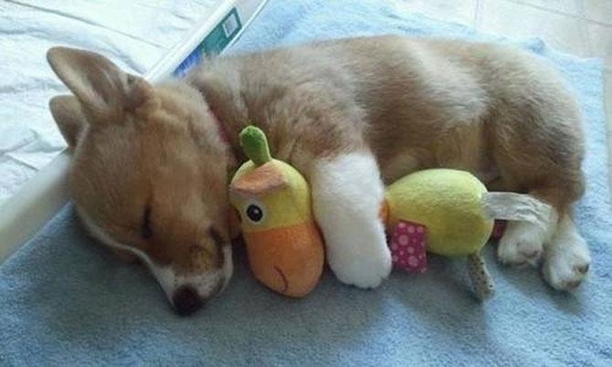 16 pui de catel dorm cu jucariile lor preferate - Poza 15