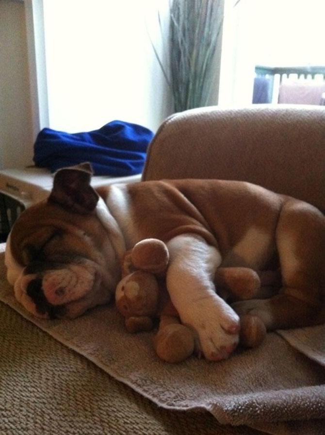 16 pui de catel dorm cu jucariile lor preferate - Poza 16
