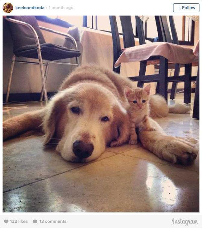 Un pisoi si un catel Golden Retriever, prieteni pe Instagram - Poza 2