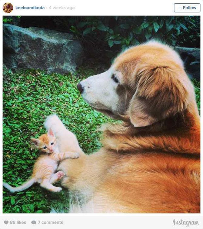 Un pisoi si un catel Golden Retriever, prieteni pe Instagram - Poza 3