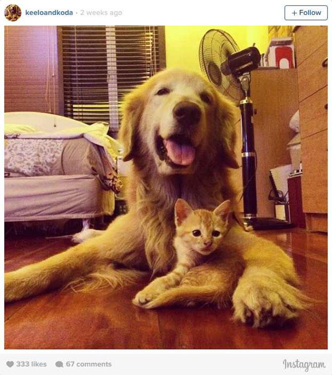 Un pisoi si un catel Golden Retriever, prieteni pe Instagram - Poza 6